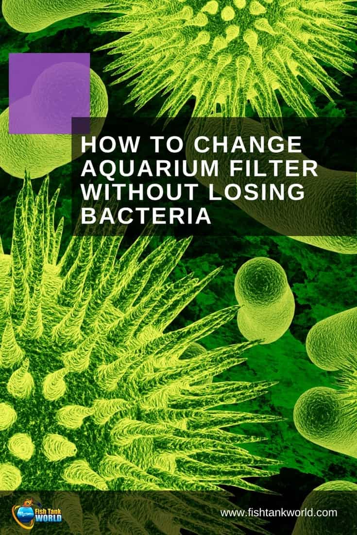 How To Change Aquarium Filter Without Losing Bacteria. Many aquarists fear that changing the filter cartridge, sponge and other media will lead to a crash in water quality. It rarely happens but when it does, it can cause an aquarium disaster. But there's good news! Once you understand how biological filtration works, you'll never have to worry again!