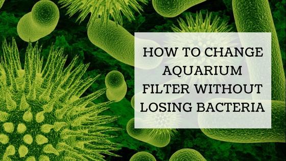 Change Aquarium Filter Without Losing Bacteria