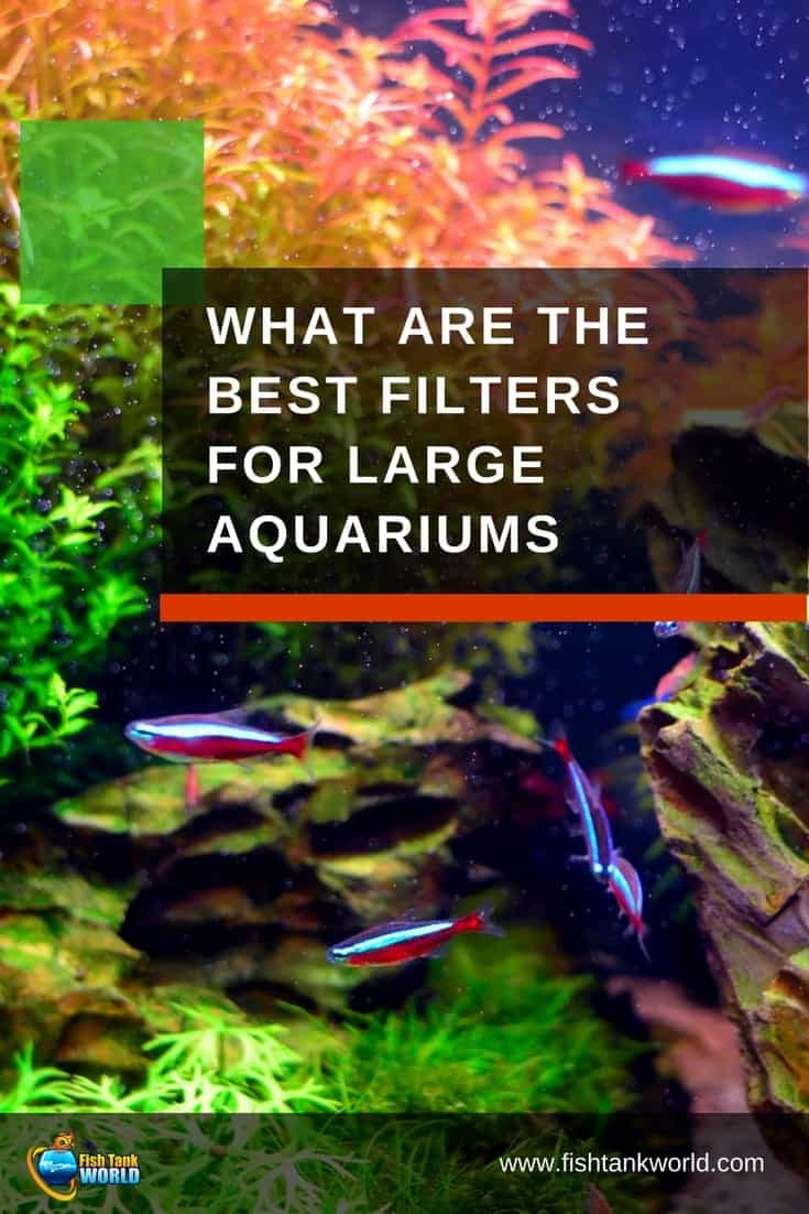 Aquarium size presents some challenges that smaller tanks don't have. They need more powerful filtration to maintain good water quality. A filter that works on a 20 or 30-gallon aquarium won't work on a 55-gallon or larger aquarium. Check out why.
