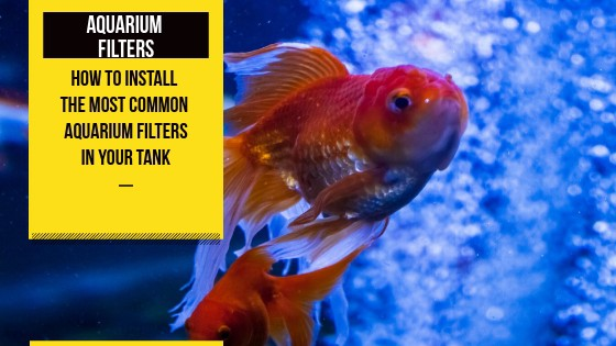 how to set up a fish tank filter fish tank world