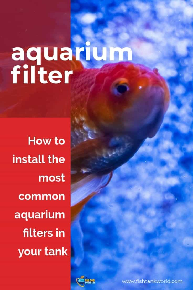 Setting up an aquarium filter is not hard but it always helps to know a few insider tips to make the process go smoothly. In this guide we cover all you need to know to set up an aquarium filter. We deal with all fish tank filter type with tips to set up each one.
