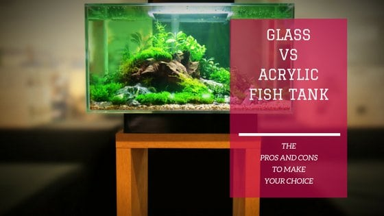 glass vs acrylic fish tank which one is best for you fish tank world