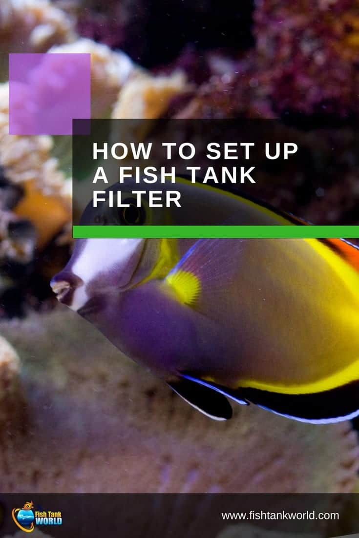 All you need to know to set up an aquarium, filter. We cover all fish tank filter type with tips to set up each one. Setting up an aquarium filter is not hard but it always helps to know a few insider tips to make the process go smoothly.