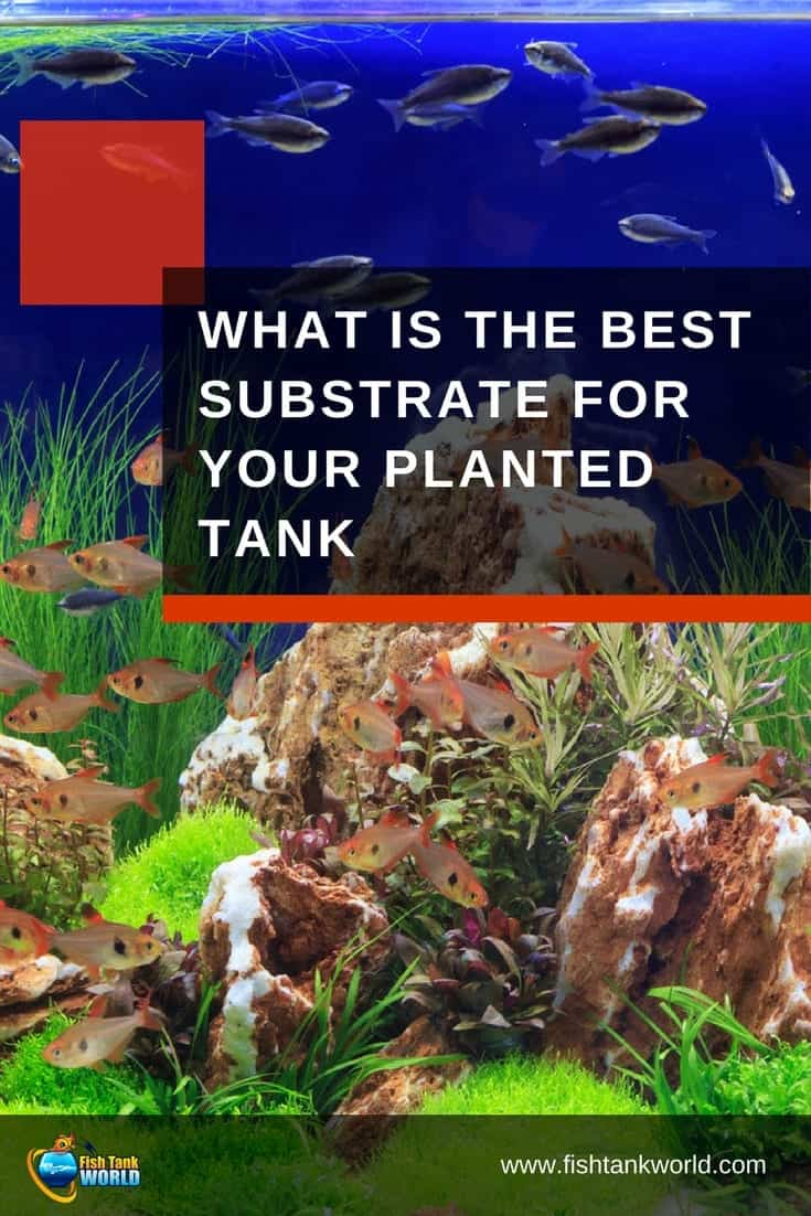 "Substrate is the ""base layer"" of your aquarium. It provides a structural foundation for your plants to get their roots into, as well as supplying the essential nutrition and minerals your plants need in order to grow. Common substrates include sand, gravel, clay, peat, soil or dirt, or a combination of two or more different kinds of material."