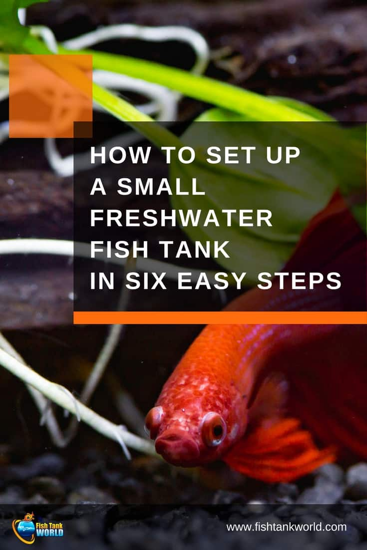 Small freshwater aquariums are growing in popularity for many good reasons. If you've never started an aquarium check out these six steps you need to know to set up a small fish tank in your home or office.