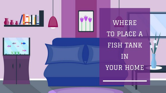 where to place a fish tank in your home