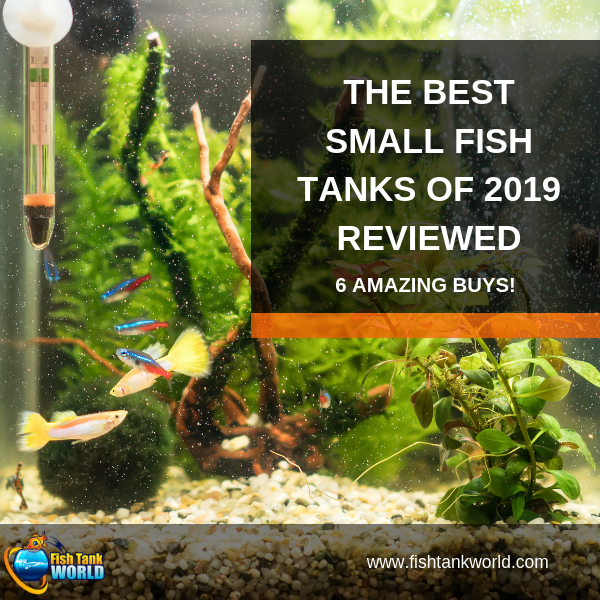 The Best Small Fish Tanks