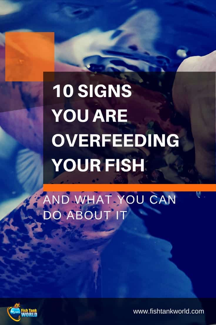 10 Signs You Are Overfeeding Your Fish