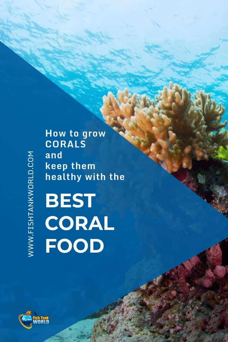 Feeding corals in a reef aquarium is a mix of art and science. Most coral research is done in the ocean, in the natural reef formations. We use this information to make our reef tanks as close as possible to the natural conditions.  Aquarists keeping corals are focused on giving them what they need to grow and thrive. Growth requires energy. This energy comes from food. Here is a guide to the food needs of corals and how to feed them using the best food on the market.