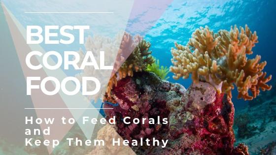 Fish & Aquariums Pet Supplies Nannochloropsis Live Micro Algae 1 Gal Coral Food Clams Salt Marine Fish Reef