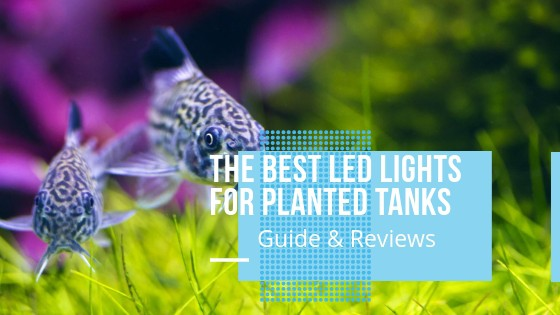 BEST LED LIGHT FOR PLANTED TANKS