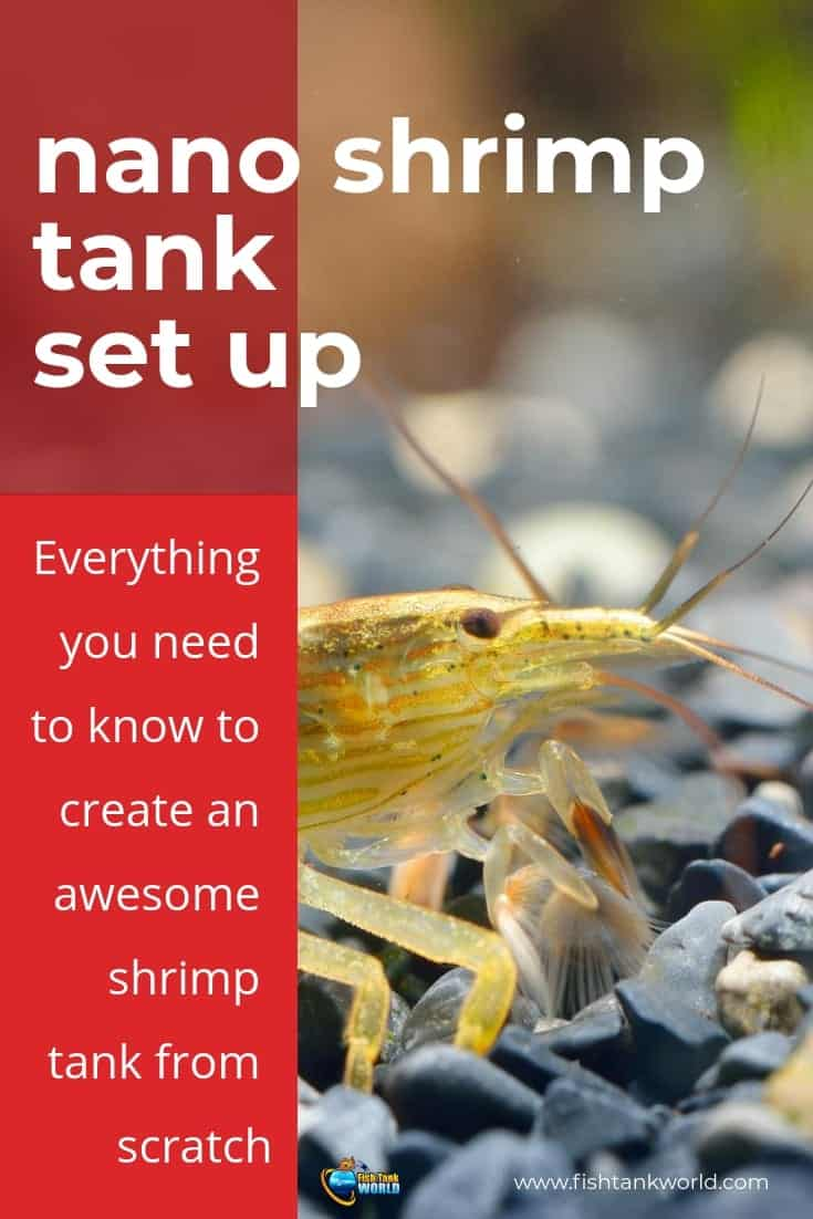 In this article we will show you how to set up and care for your own beautiful nano shrimp aquarium from scratch and enjoy it!