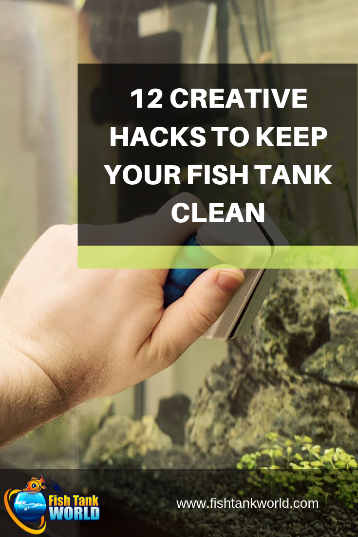 12 Creative Hacks to Keep Your Fish Tank Clean