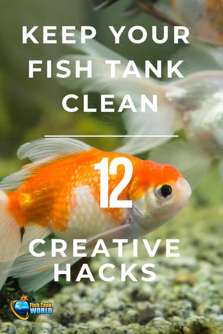 What many people do not realize is that there is a fine line between large-scale cleaning and optimum cleaning. Excessive cleaning may wipe out the beneficial bacterium that is necessary to convert the harmful byproducts of your tank into less harmful substances which, later, can be removed with water. And more, it does not take all of your time. Here are 12 creative hacks to keep your fish tank clean you can use without investing all your free time.