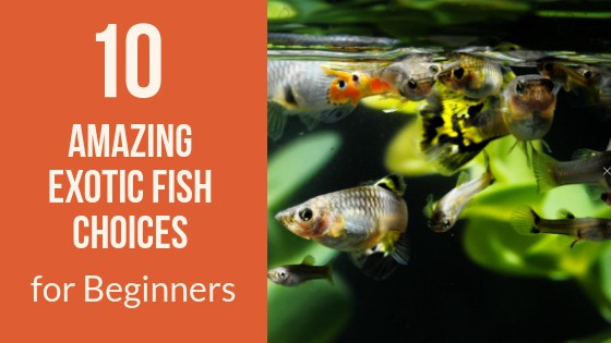 Exotic Fish Choices for Beginners