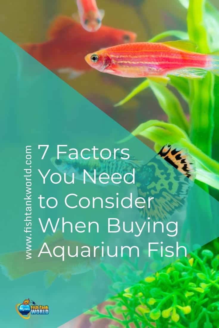7 Factors You Need to Consider When Buying Aquarium Fish