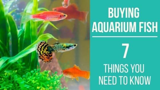 Buying Aquarium Fish