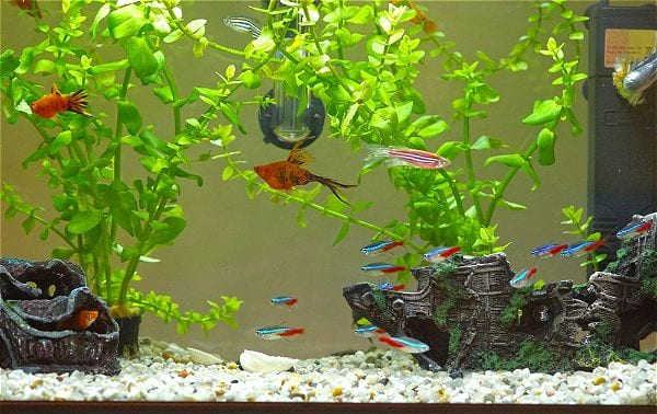 Home Aquarium with plants and substrate