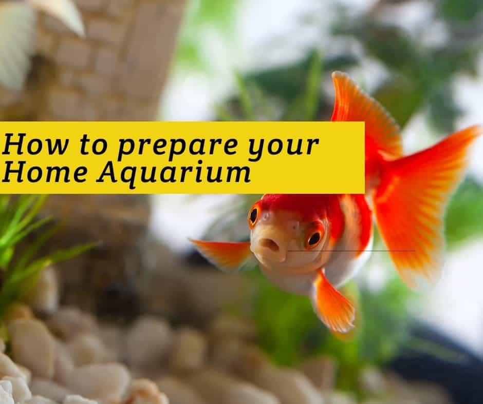 how to prepare an aquarium