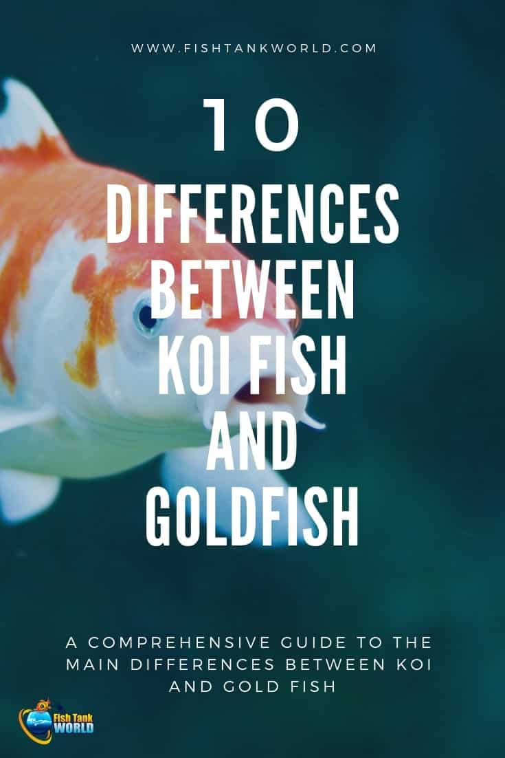 Koi and Goldfish may look very similar and you may think you can handle them the same way. They are actually two different species and require different care and attention. This is why it is important  to understand the differences and know what to look.