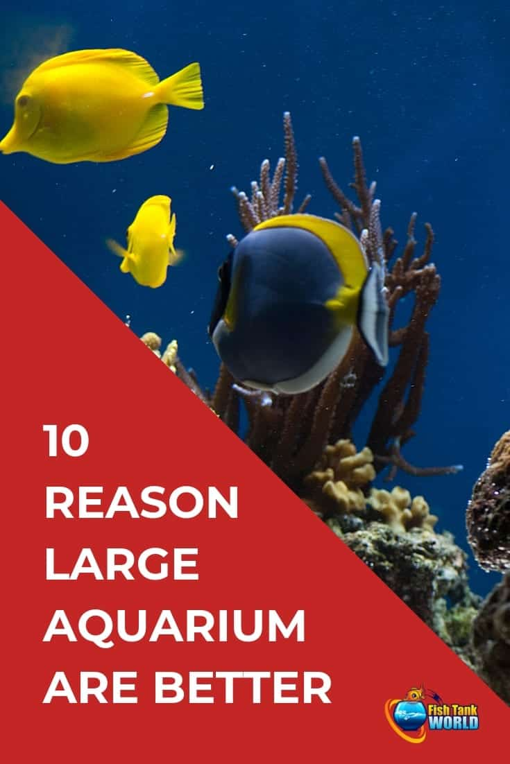 10 Reasons Why a Large Aquarium Is Better