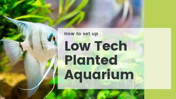 Low Tech Planted Aquarium