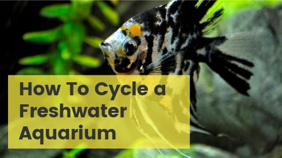 How To start A Freshwater Aquarium