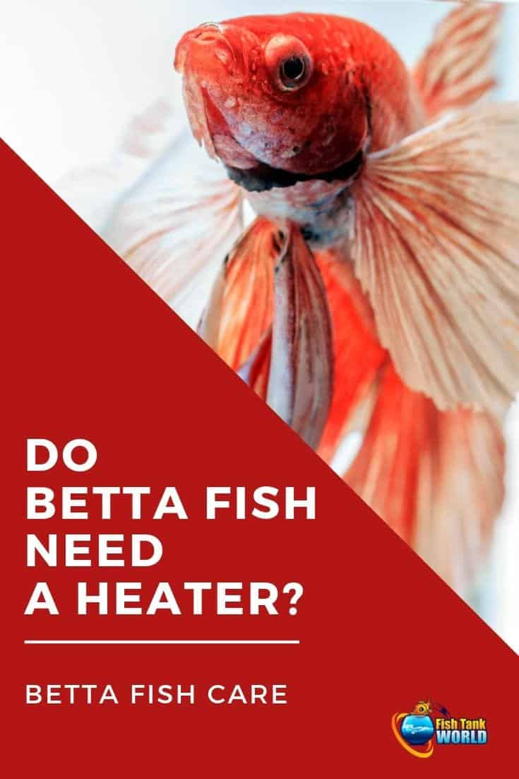 Many betta keepers assume if they feel comfortable their betta feels the same way. But this simply isn't true. The fact is, water temperature is a life or death issue for betta fish. When it comes to temperature and biology, bettas are very different from humans and other pets like cats and dogs. Here's why.