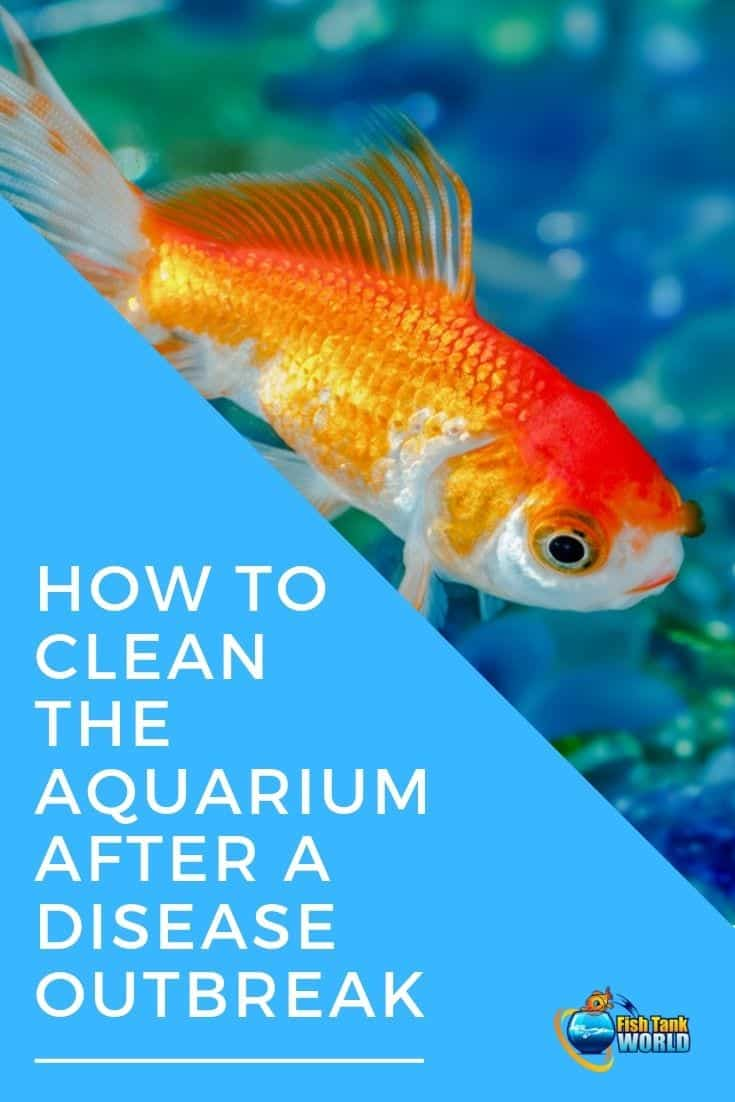 How to Clean the Aquarium After a Disease Breakout