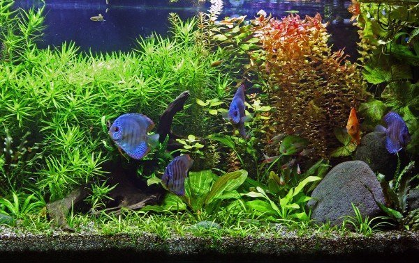 Build a Self Cleaning Aquarium