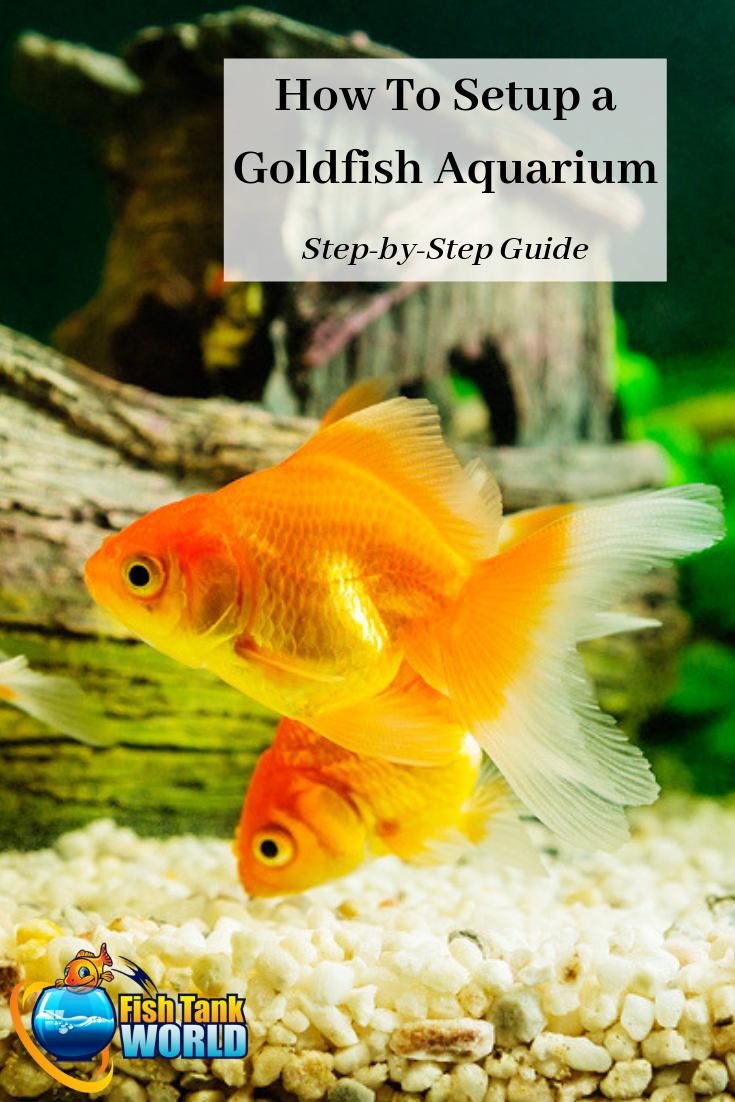 The ultimate guide on how to set up a goldfish aquarium. Learn how to choose an aquarium, filter, and lighting for your goldfish tank as well as care for your new goldfish. Follow these recommendations and you'll always have a clean aquarium filled with beautiful, fun, and healthy goldfish!
