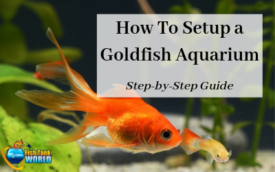 How to setup a goldfish aquarium
