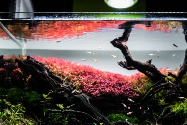 Best Rimless Aquarium
