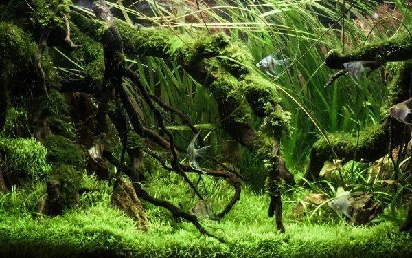 rimless aquarium
