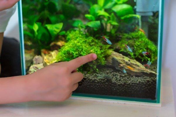 best desktop aquarium