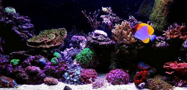 best saltwater aquarium kit