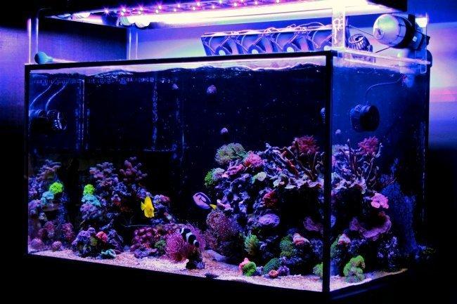 saltwater aquarium kit