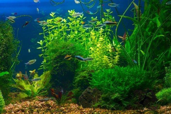 uv sterilizer aquarium